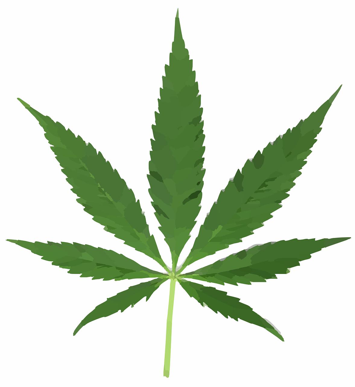 cannabis-leaf